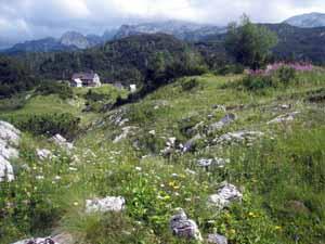 Bogatimon小屋